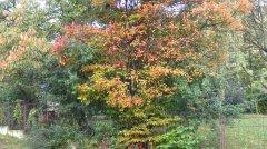 Herbstimpressionen_01.jpg