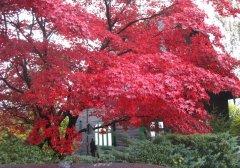 Herbstimpressionen_03.jpg