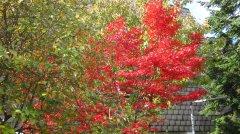 Herbstimpressionen_05.jpg