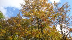 Herbstimpressionen_06.jpg