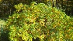 Herbstimpressionen_07.jpg