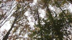 Herbstimpressionen_09.jpg