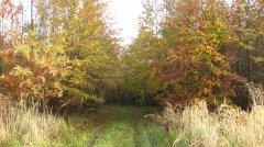 Herbstimpressionen_10.jpg