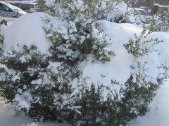 Winterimpressionen_04.JPG