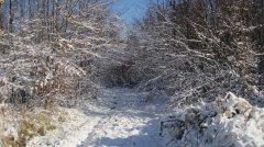 Winterimpressionen_29.JPG