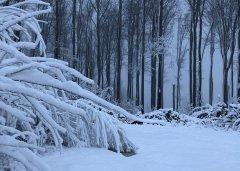Winterimpressionen_36.JPG